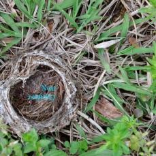 Comfort/Nest